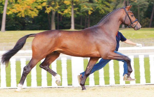 Безплатен урок по конна езда край Варна тази събота