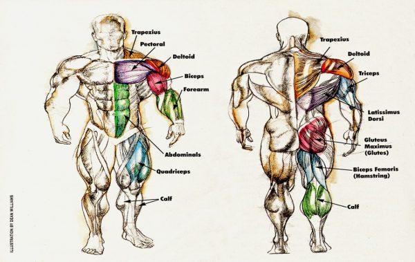 Изоставащи мускулни групи – как да ги тренираме?