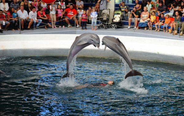 Световен ден на китовете и делфините