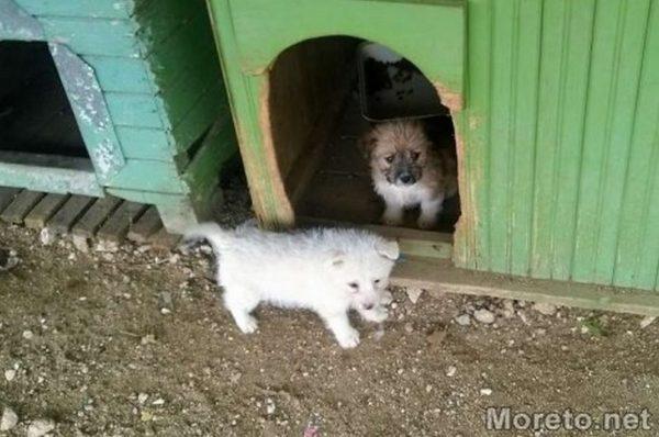 53 кучета са били осиновени от приюта в Каменар през миналата година