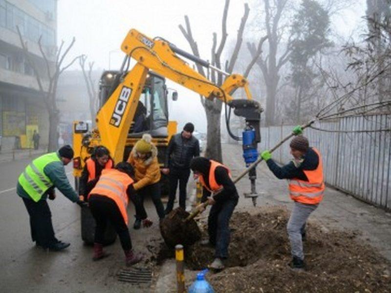 Започва пролетно засаждане на дървета и храсти във Варна