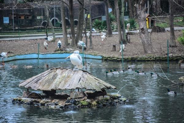 Варна ще има най-красивия зоопарк след ремонта, подписаха договор за обновяването му