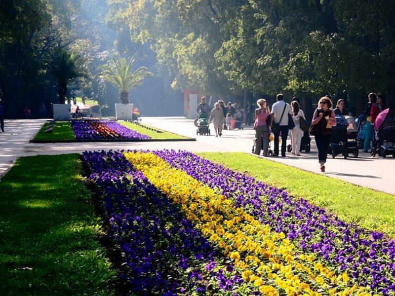 Засаждат 118 300 цветя в Морската градина