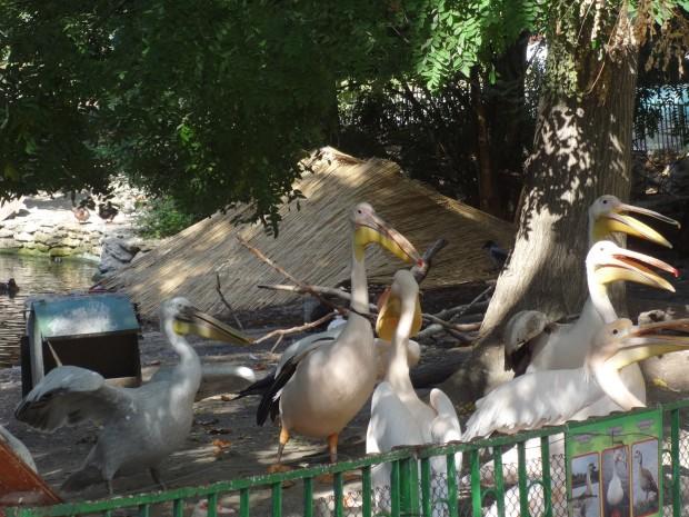 Канят малки и големи на виртуална разходка из зоопарка на Варна