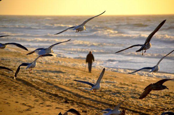 Забранява се достъпът до плажовете и крайбрежните зони във Варна