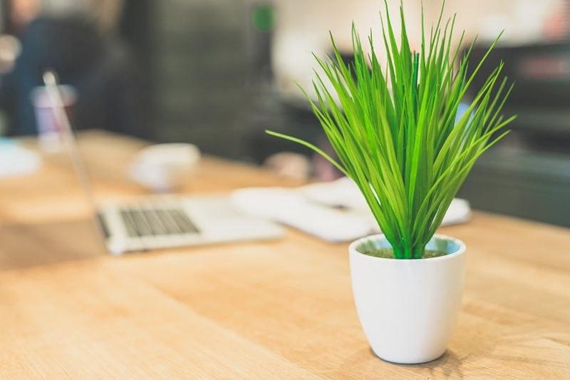 Цвете на бюрото подобрява психичното здраве