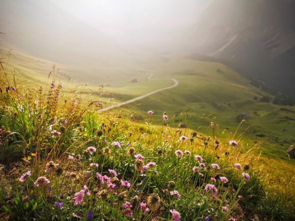 Отпадна забраната за посещения на национални паркове и планини