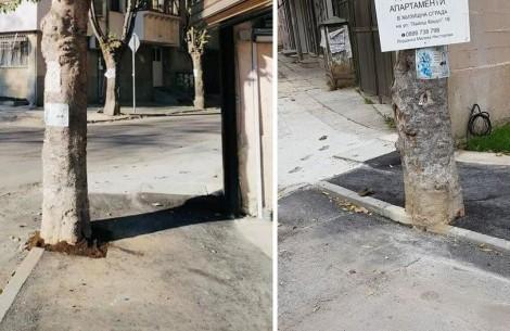 """Бърза реакция! След като асфалтираха дърво в """"Аспарухово"""""""