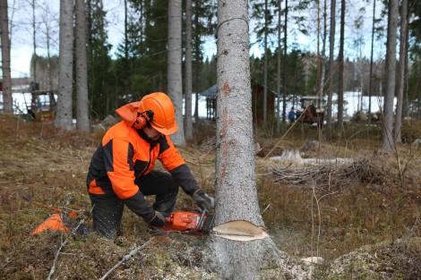 Жителите на Горна Трака с петиция за незабавно спиране на изсичането на боровата гора в района