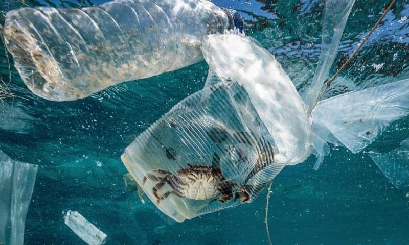 Край на пластмасата за еднократна употреба! Глътка въздух за природата