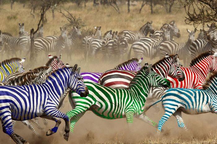 Към 12,00 часа: вижте какво е временното класиране на зебрите към този час