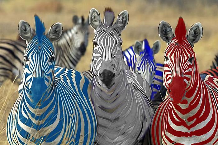 Към 14,00 часа: запазва се дистанцията между първите две зебри
