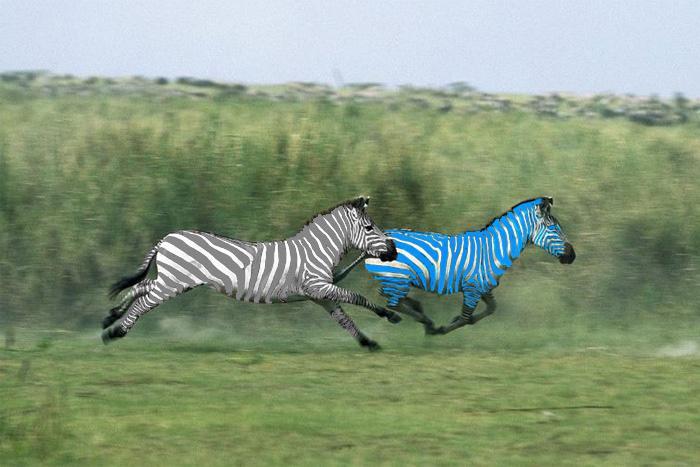 Към 15,00 часа: скъсява се дистанцията между първите две зебри